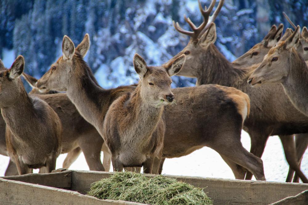 Weidgerechtigkeit, Jagdfakten Österreich