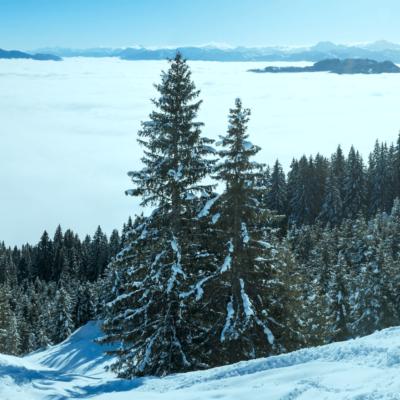 Erhaltung von Natur und Wald, JAGDFAKTEN Österreich