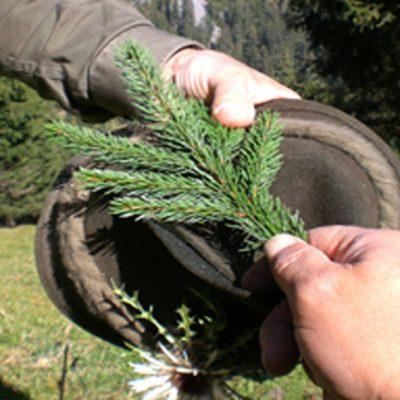 Der Bruch und seine Bedeutung; Jagdfakten Österreich