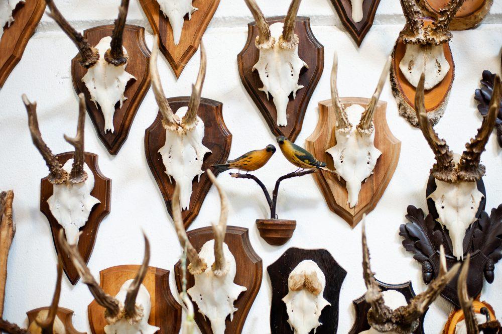 Trophäen wichtige Informationen über Wildbestand, Jagdfakten Österreich