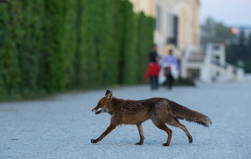 Wildtiere in Wien, Jagdfakten Österreich