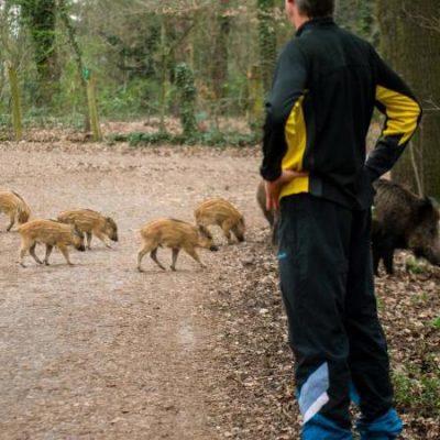 Vorsicht Wild - wie verhalte ich mich richtig? Jagdfakten Österreich