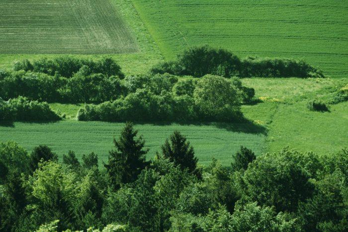 Lebensräume Hecken, Wald, Jagdfakten Österreich