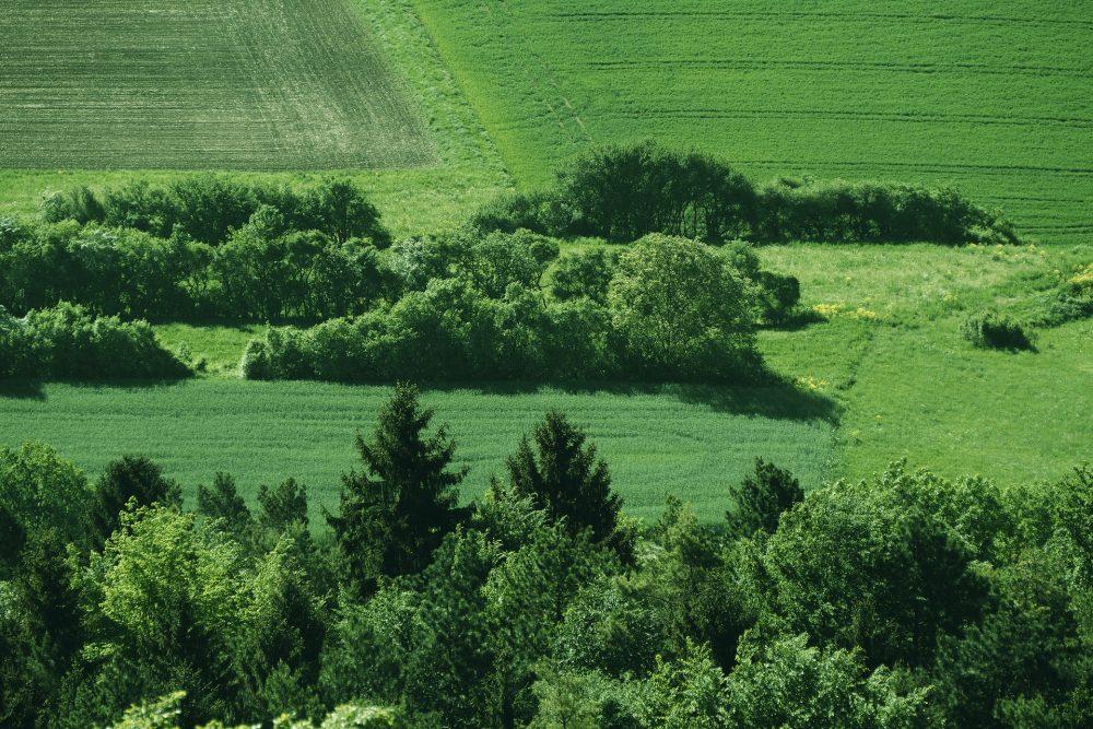 Lebensräume Hecken, Wald wäschst in Österreich, Jagdfakten Österreich
