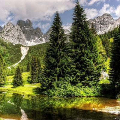 Naturkreislauf, Lebensraum, Baum, Jagdfakten Österreich
