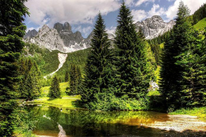 Lebensraum, Baum, Jagdfakten Österreich
