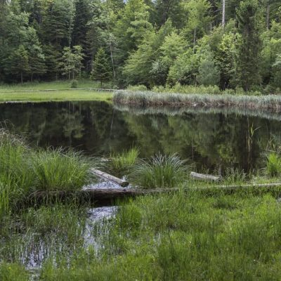 Moor und Teich, Lebensräume für Wildtiere, JAGDFAKTEN Österreich