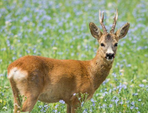 Die wichtigsten Fragen zu Jagd & Jäger in Österreich