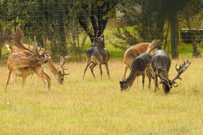 Wildtierhaltung, Jagdfakten Österreich