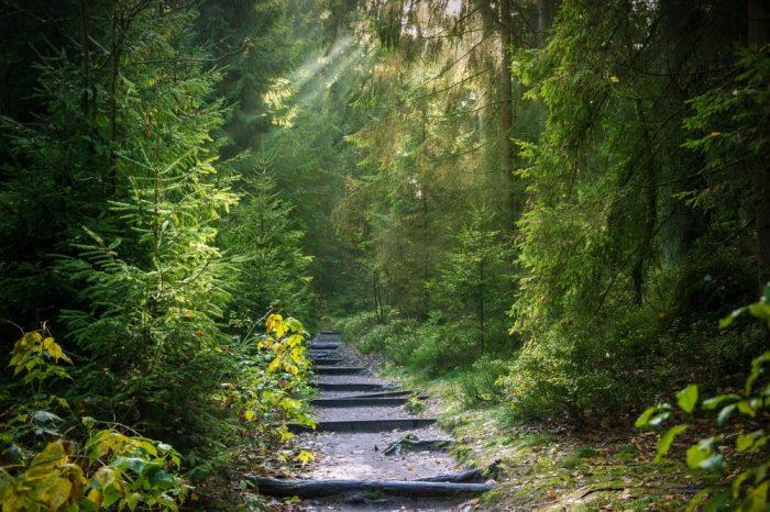 Lebensraum Wald, Jagdfakten.at
