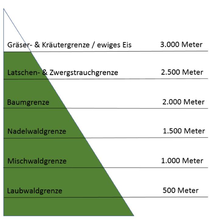 Vegetation am Berg, Grafik, Jagdfakten Österreich