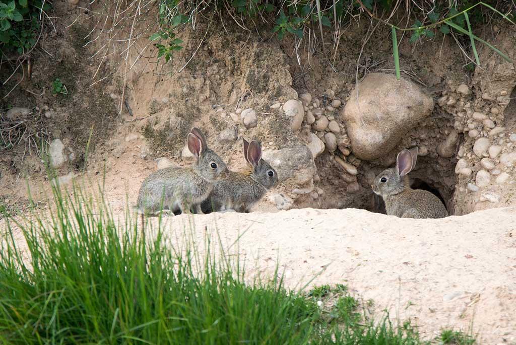 Wildtiere in der Stadt: Jagdfakten.at informiert