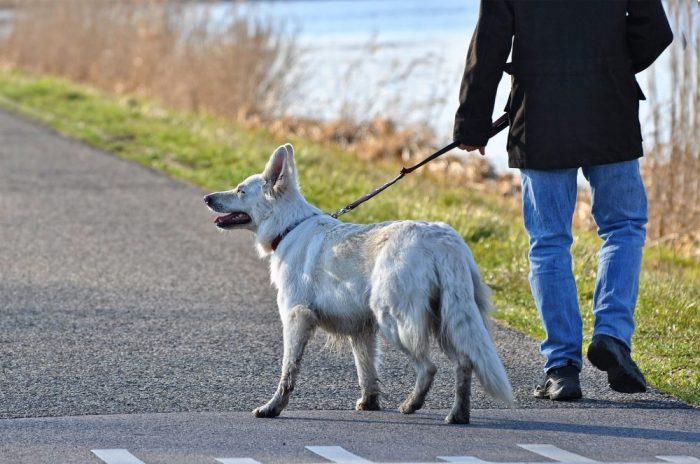 Interview Hundetrainer Alexander Minnich: Verhalten mit Hund im Wald, Jagdfakten.at