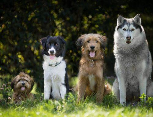 Interview zum richtigen Verhalten mit dem Hund in der Natur