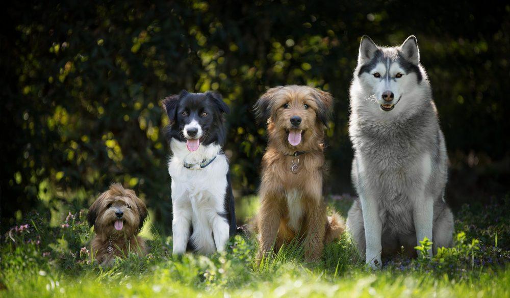 Interview Hundetrainer: Verhalten mit Hund im Wald, Jagdfakten.at
