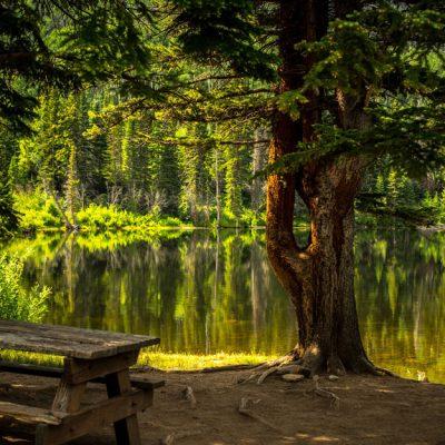 Lebensraum Wald, Jagdfakten Österreich