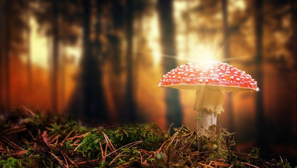 Pilze Und Schwammerl In Osterreich Kompakt Zusammengefasst
