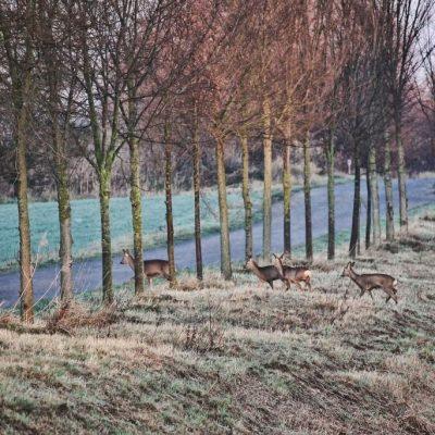 Wildunfall vermeiden, Jagdfakten Österreich