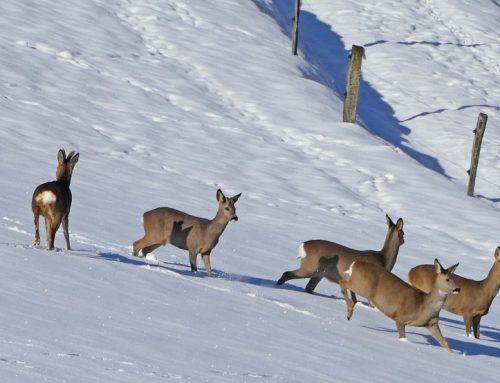 """""""JAGD ÖSTERREICH"""": Wie viele Lebensräume bleiben heimischen Wildtieren noch?"""