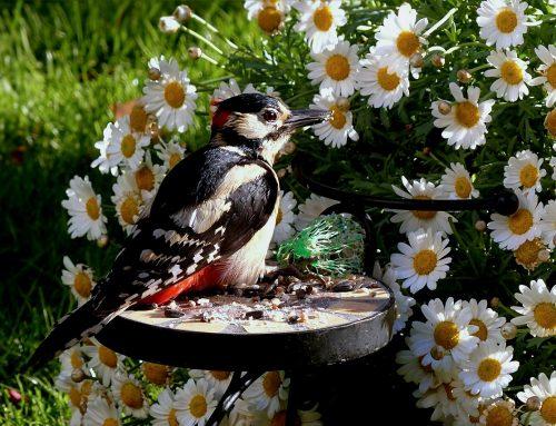 Vögel füttern: Bunte Vielflieger am Futterhäuschen
