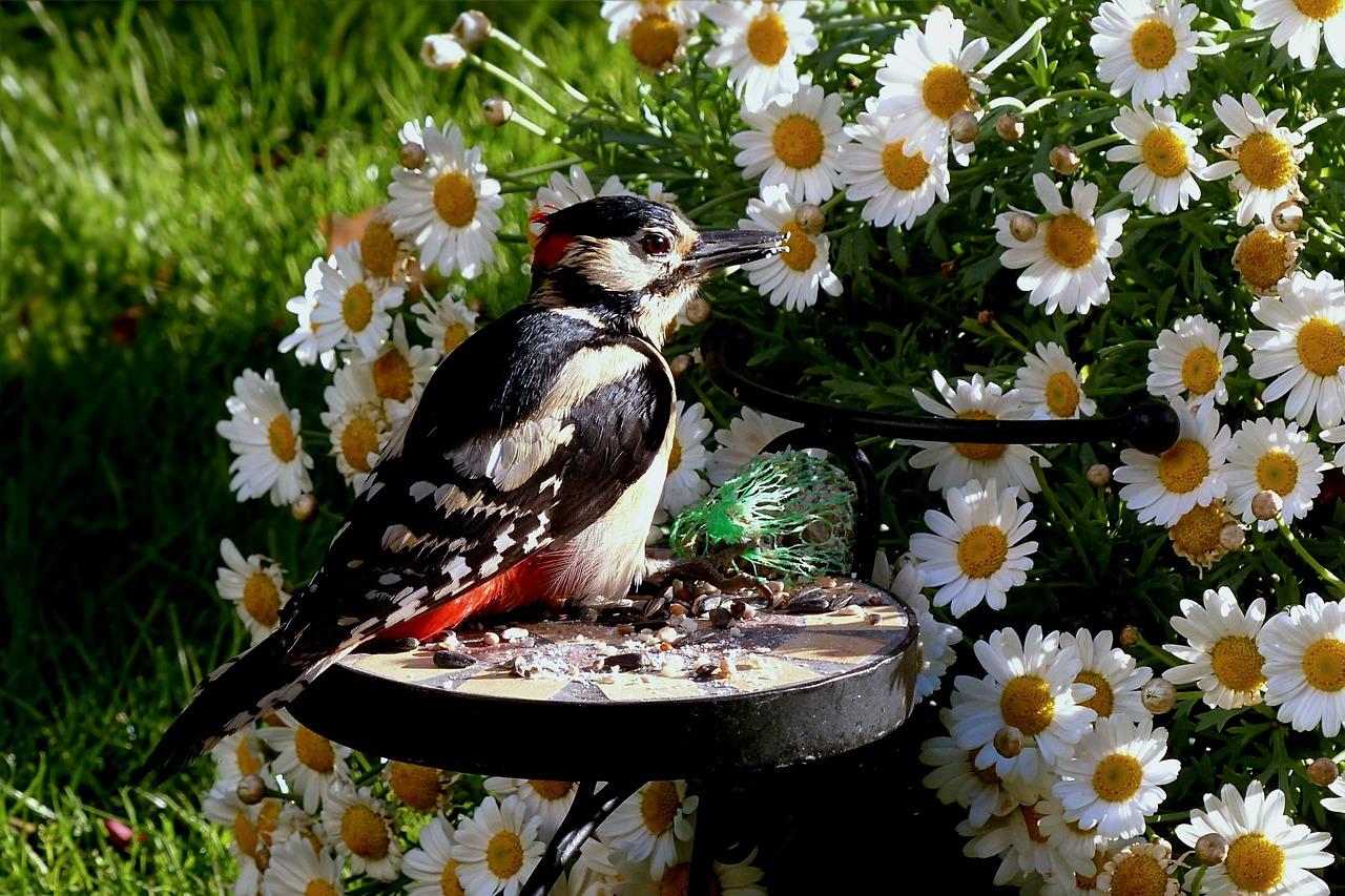 Vögel füttern, Jagdfakten.at
