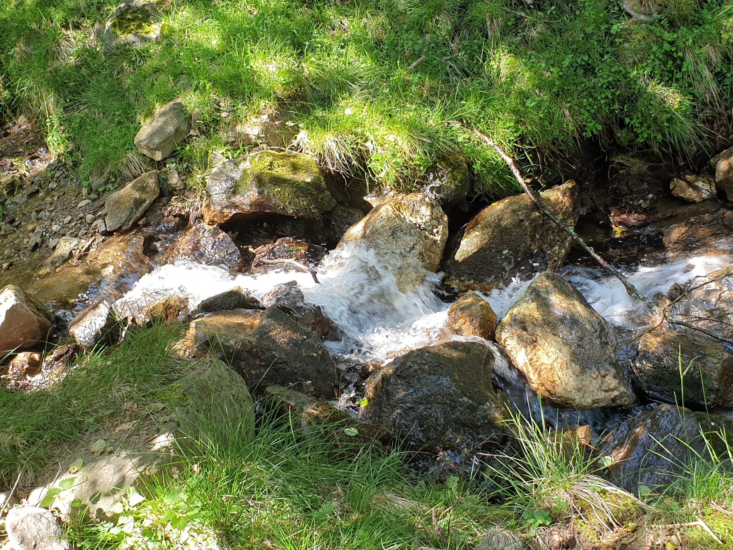 Freizeittipps Nationalparks in Österreich, Alpenwildpark Feld am See, Jagdfakten.at