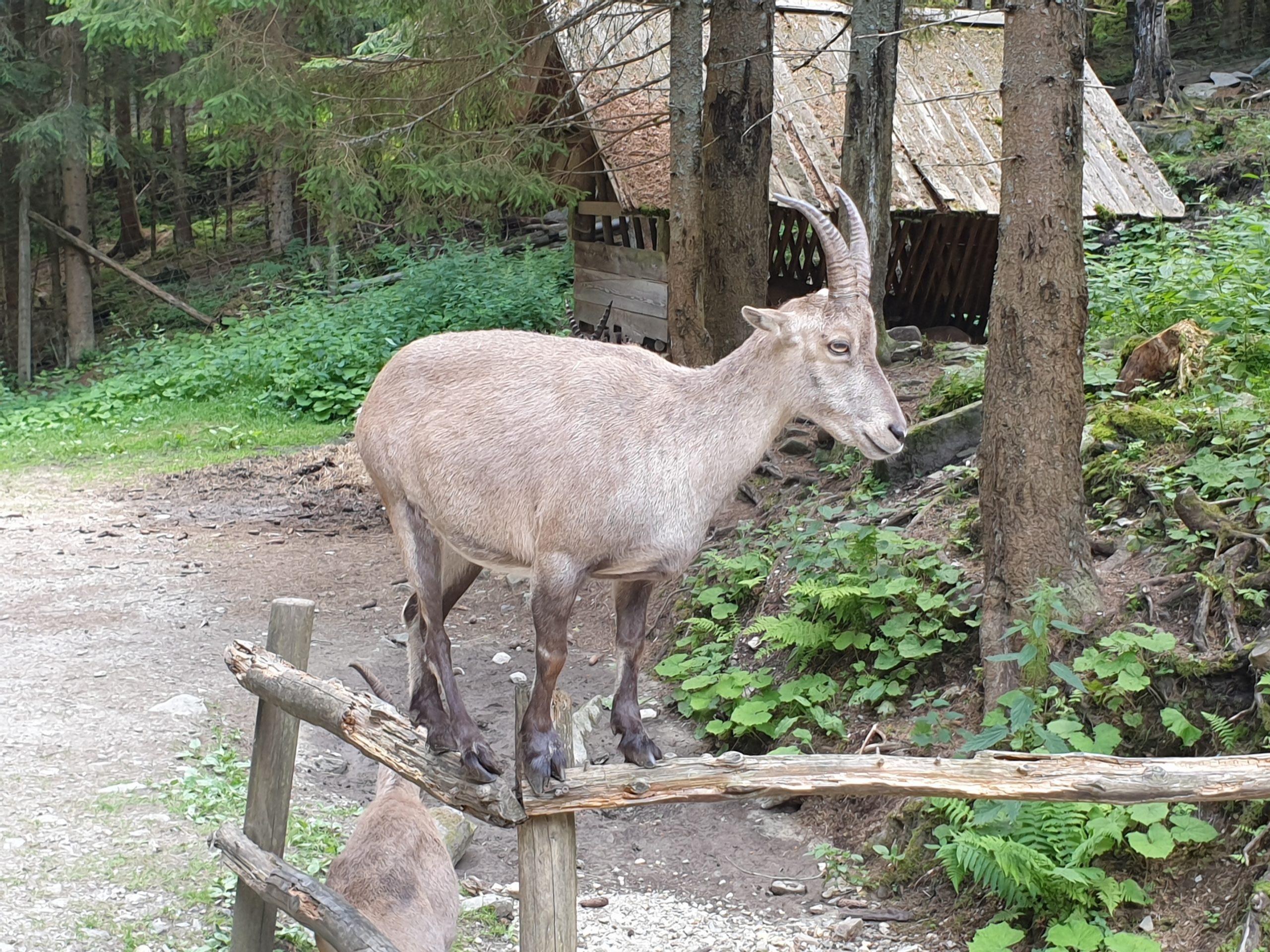 Freizeittipps Nationalparks in Österreich, Wildpark Mautern, Jagdfakten.at