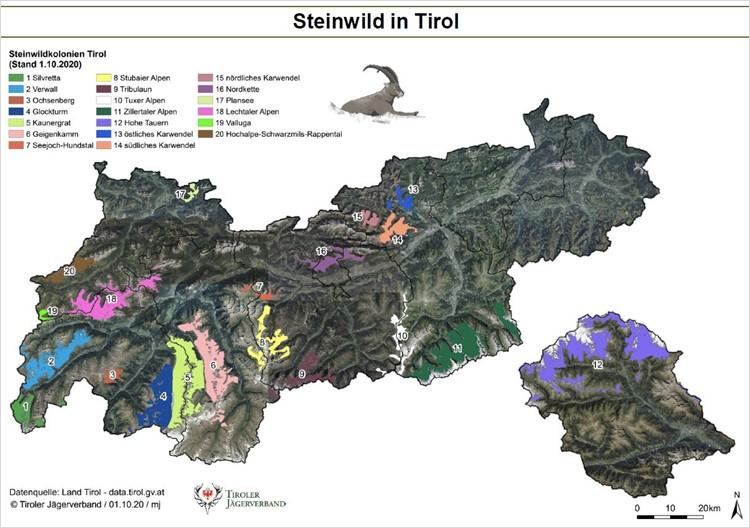 Steinbockbestand Zählung in Tirol 2020, Jagdfakten.at informiert