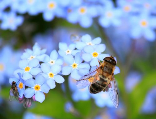 Internationaler Tag der Biene