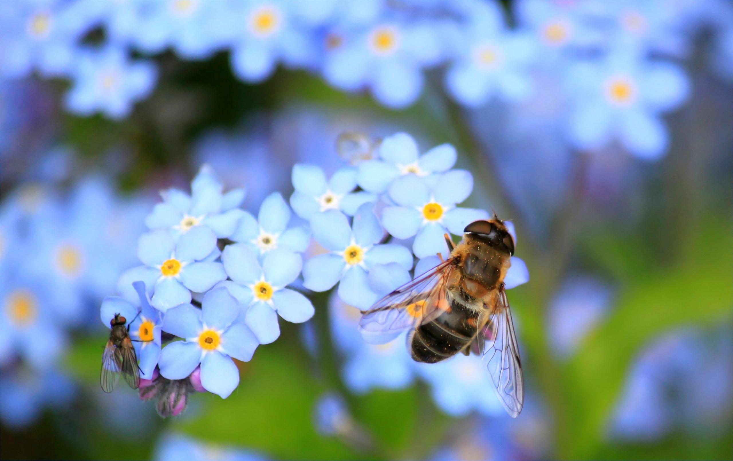 Internationaler Tag der Biene, Jagdfakten.at informiert